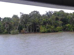 La foresta che da sul Rio delle Amazzoni