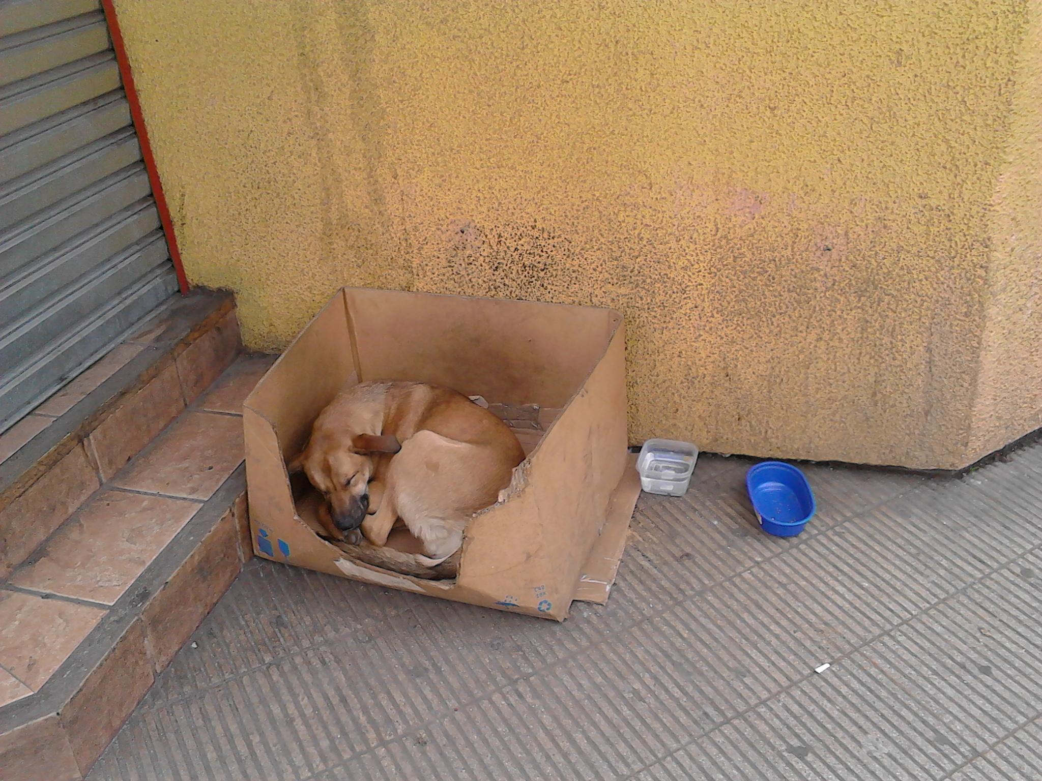 Voglio rinascer cane in Cile.