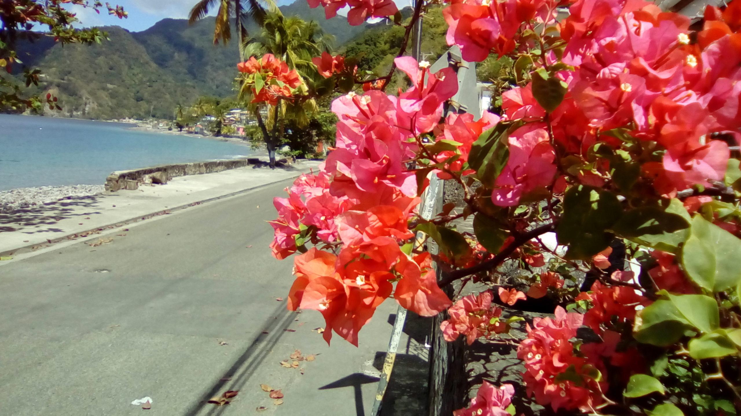 Dominica, semplicemente