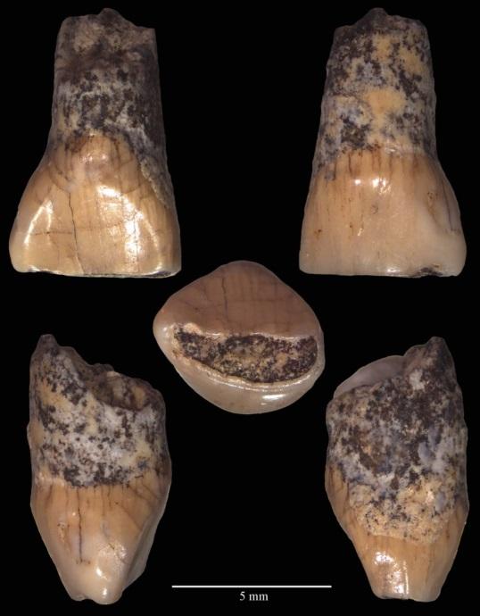 Di chi era il dentino di Isernia: campeggiatori, macellai o carognari?
